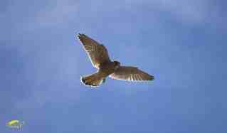 Aves que Podemos Encontrar en el Huerto y de que se Alimentan