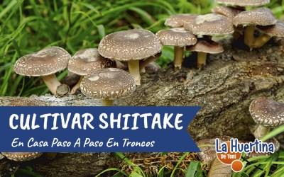 Como Cultivar Shiitake En Casa En Troncos