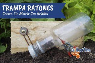 Trampa Casera Para Ratones Con Botellas Eficaz Y Sin Muerte