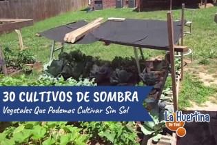 30 Vegetales Que Podemos Cultivar Con Sombra