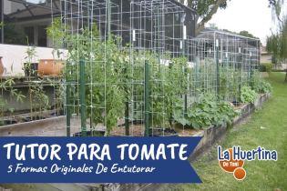 5 Formas Diferentes Y Originales De Entutorar Los Tomates