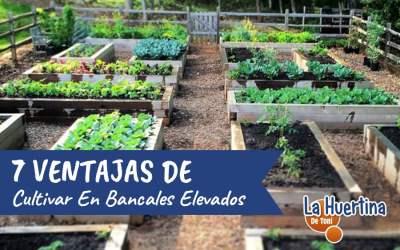 7 Ventajas De Cultivar En Bancales Elevados En El Huerto
