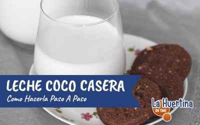 Cómo elaborar Leche de Coco casera de forma muy sencilla