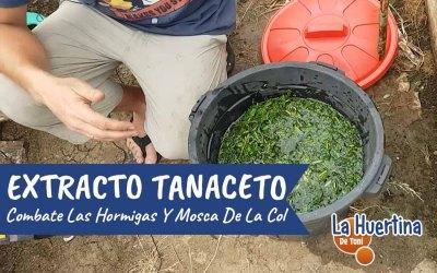 Extracto De Tanaceto Para Combatir Hormigas Y Mosca De La Col