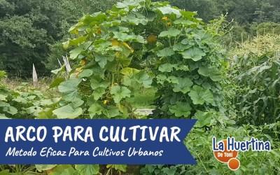 Evolución Del Arco Para Trepadoras – Calabazas, pepinos, melón, judías, moras