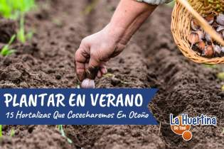 15 Vegetales Para Plantar En Verano Y Cosechar En Otoño