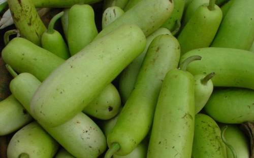 Bottle Gourd लौका Vegetables & Fruits Delivery in Nepal