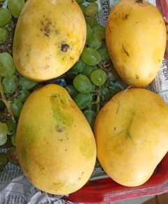 MANGO Groceries Vegetables & Fruits Delivery in Nepal Kathmandu