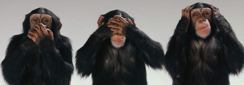 chimpance-gracioso