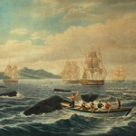 Epigenética al rescate de las ballenas