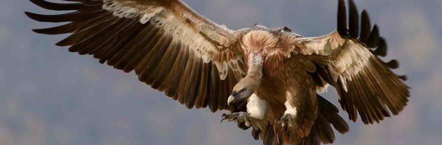 Vulture_pexels-photo-38056-2
