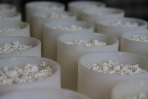 laitierie gerentes