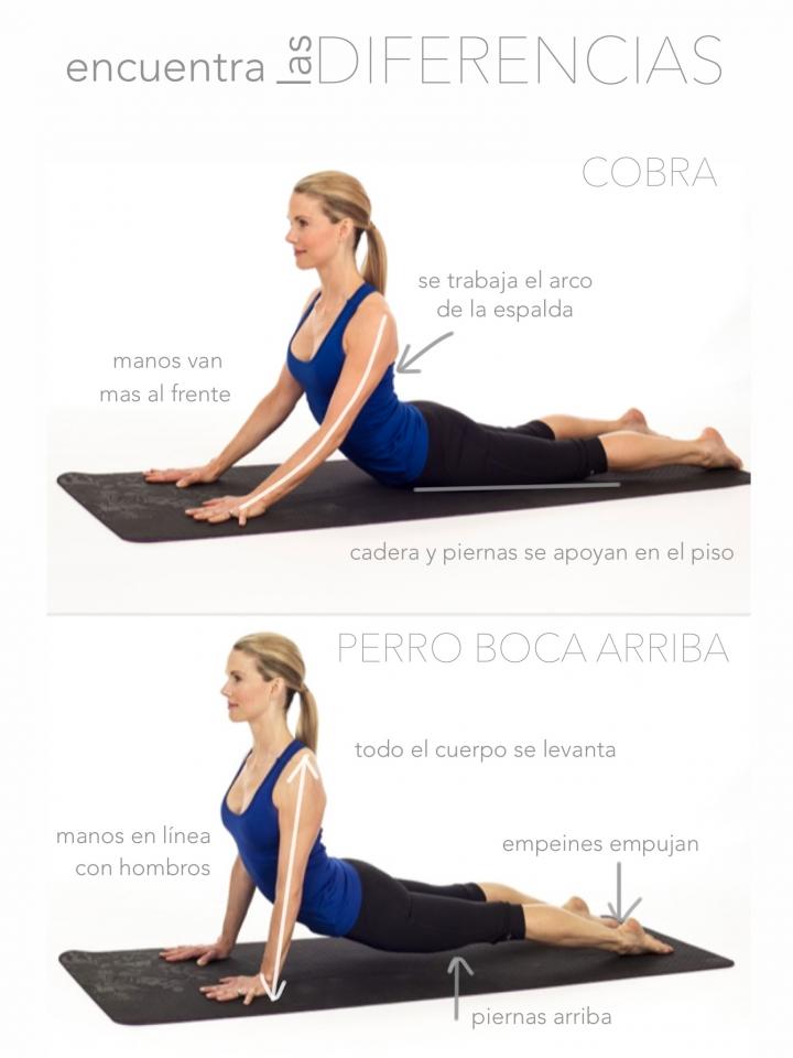 50 das 50 posturas Da 8 Perro boca arriba  Asociacin de Instructores de Yoga Latinoamrica