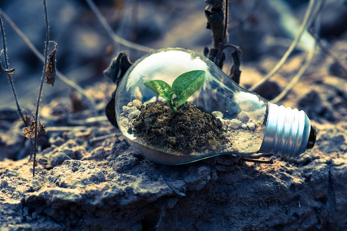 Plant growing in a recycled lightbulb, signifying eco-friendly