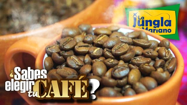 ¿Sabes elegir tu café?