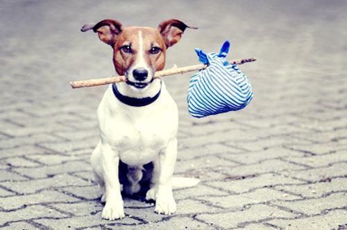 dog travelling