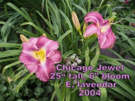 Chicago Jewel
