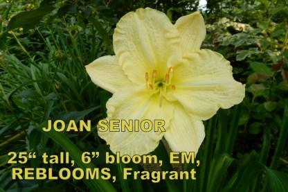 Joan Senior