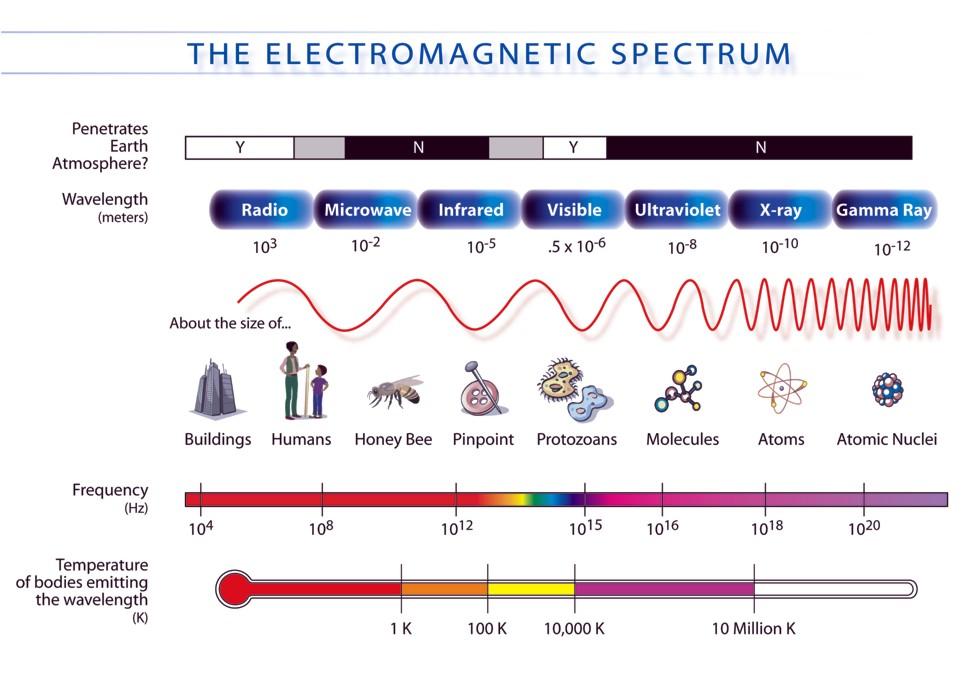 flower parts diagram without labels strike slip fault block electromagnetic waves