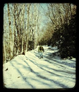 Snowy trail to the top of Whiteside Mountain, between Highlands and Cashiers, NC