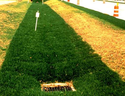 Grassed Swale Examples