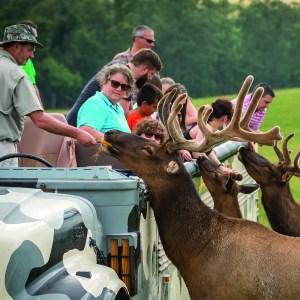 People feed elk at Lake Tobias Wildlife Park safari tour