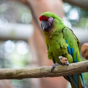 Parrot at Lake Tobias Wildlife Park