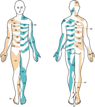 mapping-nerve-area-distribution