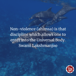 Non-violence is that discipline that allows one to enter into the universal body! ~Swami Lakshmanjoo
