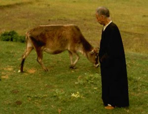 Swamiji with cow