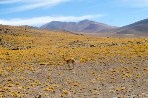 La La Leo - San Perdro de Atacama_05