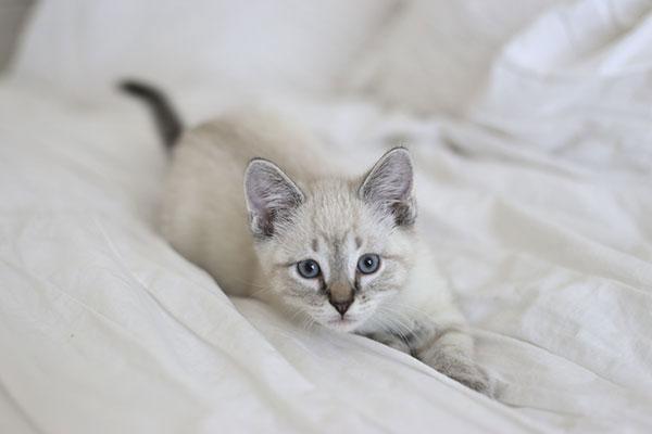 la-la-lovely-kitty-2