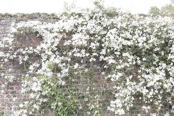 la-la-lovely-english-garden-4