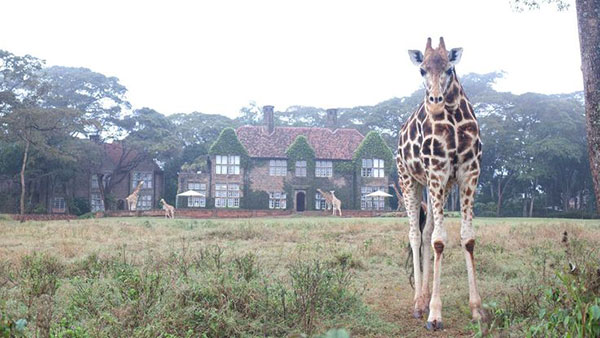 giraffe-manor2_lalalovely