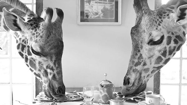 giraffe-manor3_lalalovely