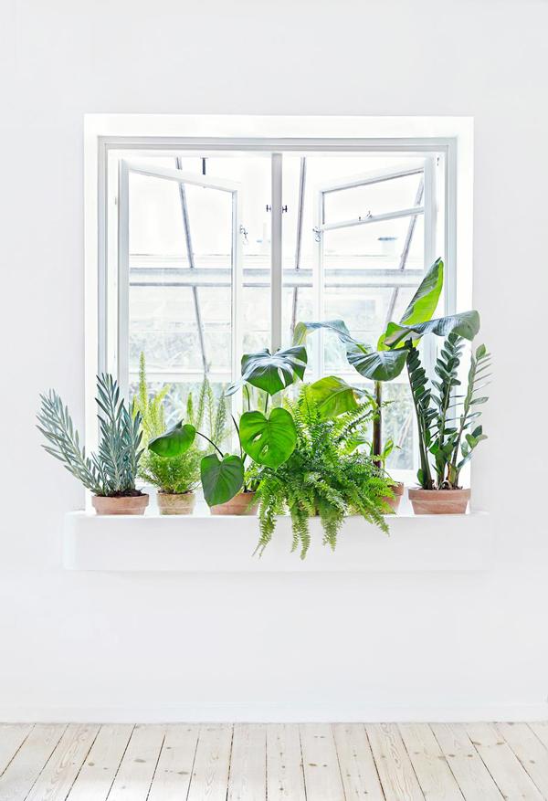 La La Loving plants in window