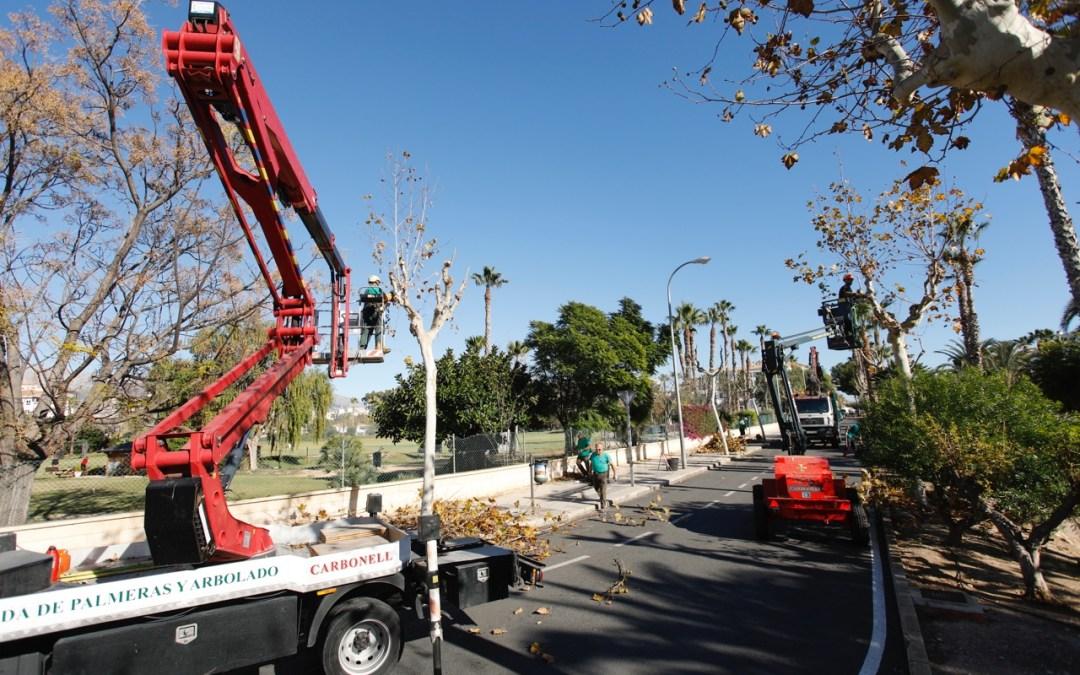 El Ayuntamiento de l'Alfàs desarrolla una campaña intensiva de poda de arbolado