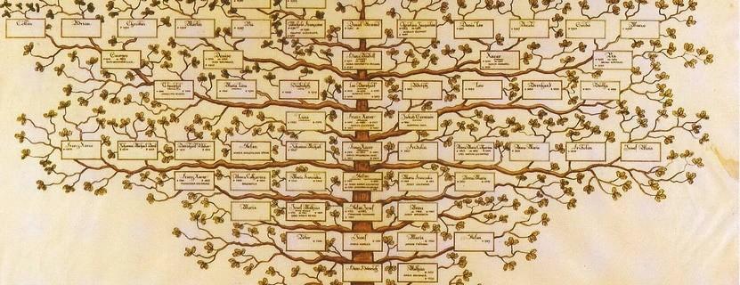 Stammbaum, warum