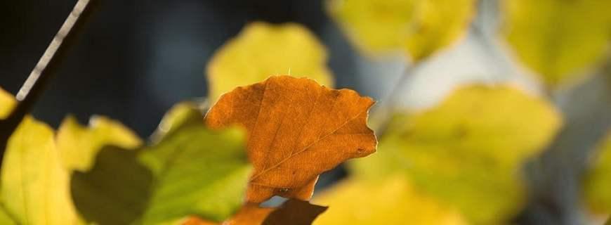 Herbst - Mit dem Pubertier auf einer Herbsttour...