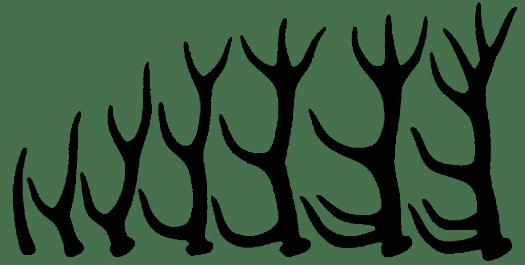 Hirsch Geweih - Waldbewohner: Der Rothirsch