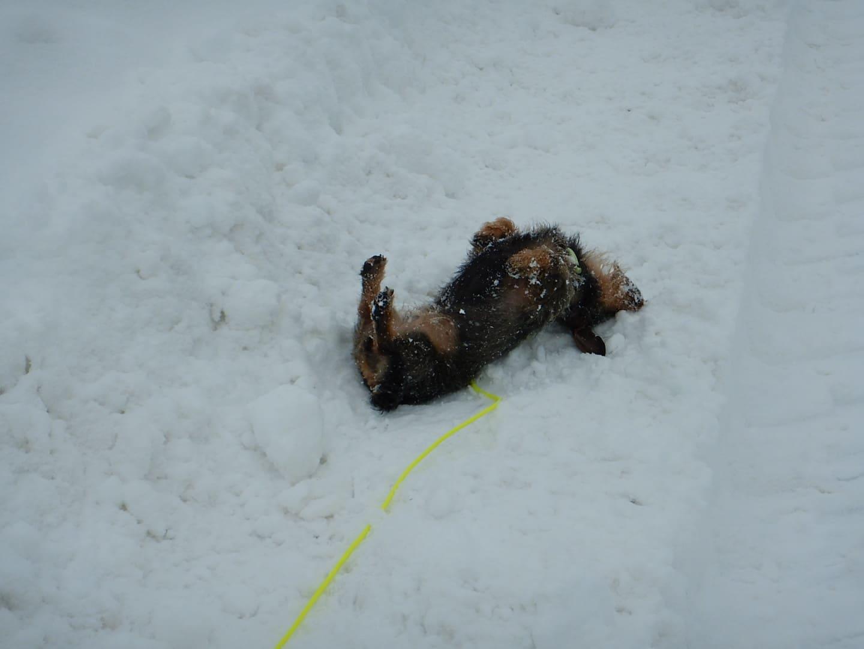 Lilo und Schnee