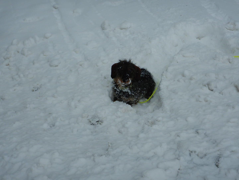 Lilo und viel Schnee