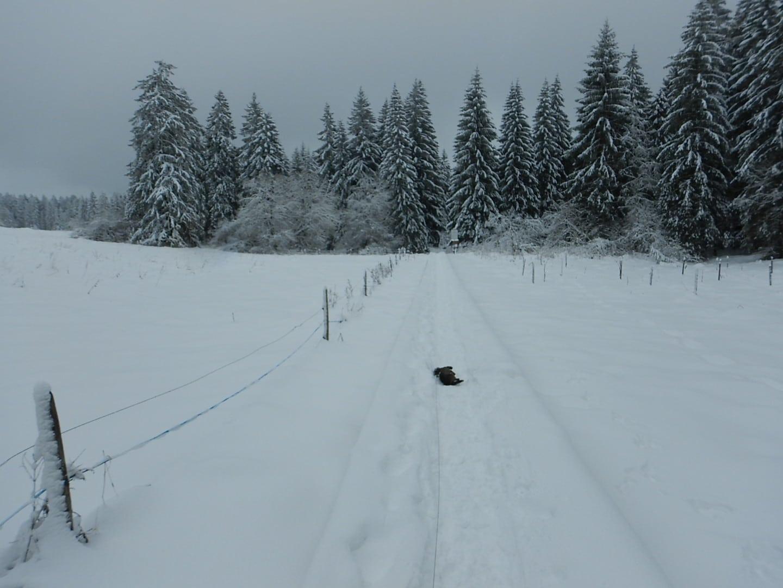 Daggel hat wieder Schnee-Feelings