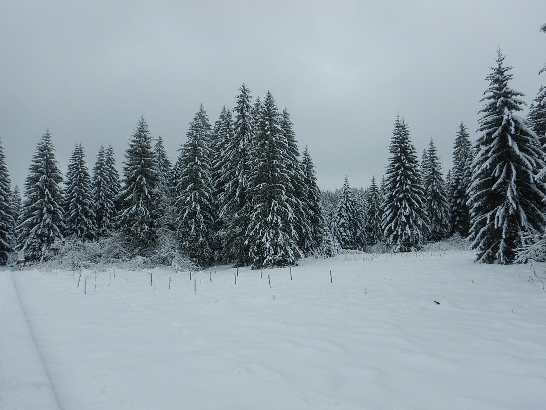 Natur im Winter
