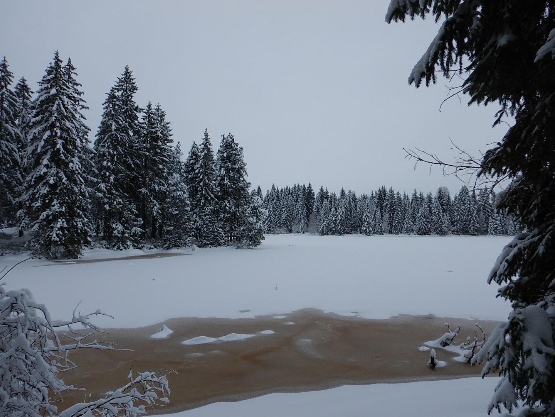 Das Moorwasser des Sees im Eis