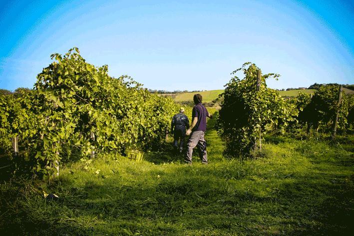 Nell'armonia di una campagna incantevole l'azienda Mariotti Cesare produce un grande vino