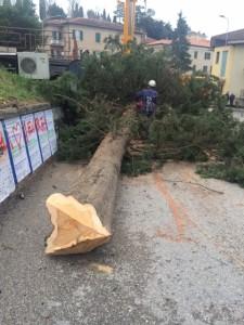 Urbino, messe in sicurezza le alberature di via Giro dei debitori