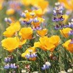 L'utilizzo dei fiori come metodo curativo, giovedì un incontro a Marotta