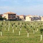 SENIGALLIA / Dopo l'intervento alle Saline ripulito anche il parco della Cesanella, ma le piante sono ancora molto piccole