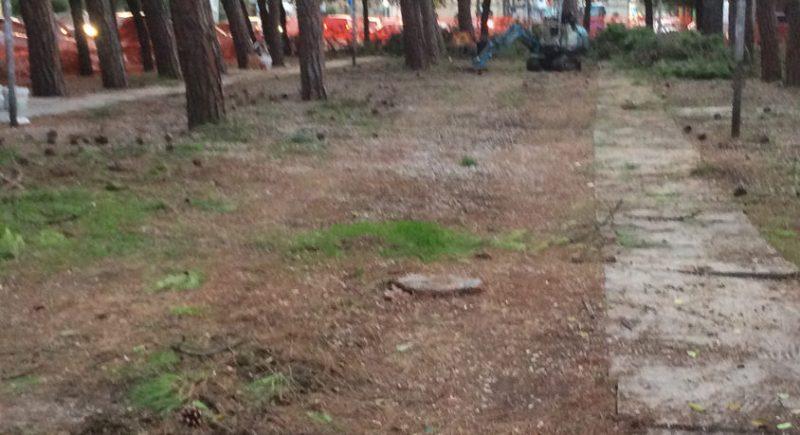 """I Giovani democratici di Senigallia sul taglio dei pini in via Oberdan: """"Concordiamo con il progetto che l'Amministrazione comunale sta portando avanti"""""""